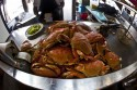 Crabs at Fisherman&#039;s Wharf