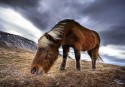 Trey Ratcliff&#039;s Horse HDR