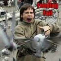 Bird Attack Fail