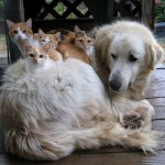 Cute Photo of the Day: Dogs and Cats Just Getting Along