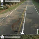 Did the Google Maps Car Hit a Deer?