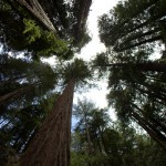 A Photographic Journey Through Muir Woods National Park